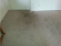 floor_stains_before