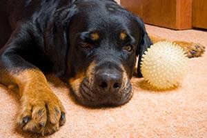 dog-deoder